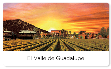 Sunset over vineyards of the Valle de Guadalpue